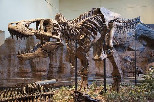 rsz_tyrannosaurus_rex_holotype