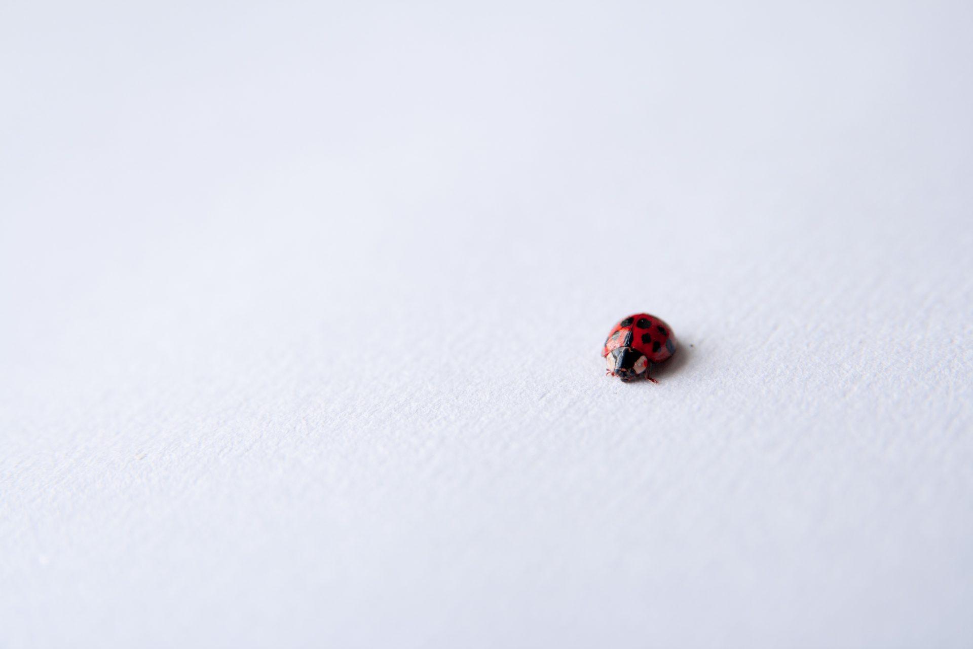 0728.sdt-bugcrowd